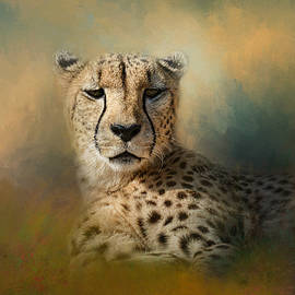 Jai Johnson - Cheetah Enjoying A Summer Day