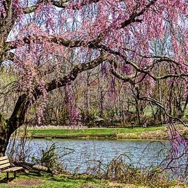 Geraldine Scull   - Cherry Blossom And Bench