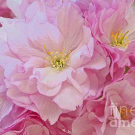 Regina Geoghan - Cherry Blossom Charm