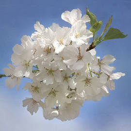 Kim Hojnacki - Cherry Blossom Jubilee