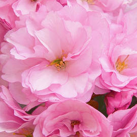 Regina Geoghan - Cherry Blossom Pink