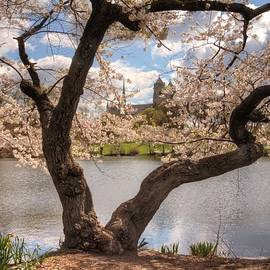 Geraldine Scull   - cherry blossom tree framing Cathedral at Branch Brook Park