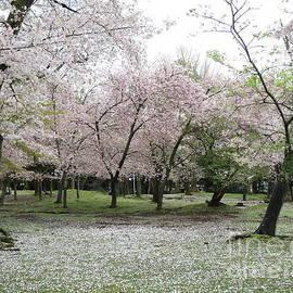 Taikan Nishimoto - Cherry Blossoms in Nara Park