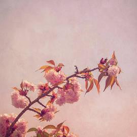 Wim Lanclus - Cherry Blossoms