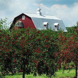 David T Wilkinson - Cherry Orchard and Barn