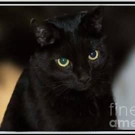 Linda Troski - Chevy , the Cat