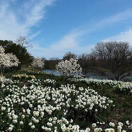 Rosanne Jordan - Chicago Botanic Garden Spring