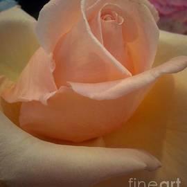 Joan-Violet Stretch - Chiffon Rose