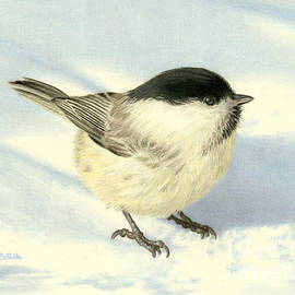 Sarah Batalka - Chilly Chickadee