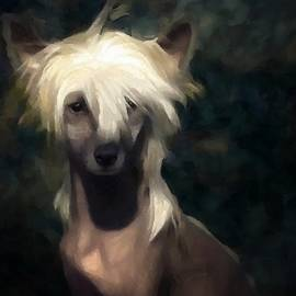 Gun Legler - Chinese crested dog