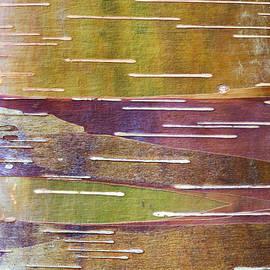 Chinese Red Bark Birch - Tim Gainey