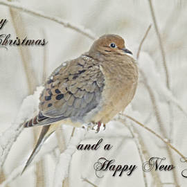 Mother Nature - Christmas and New Year Greeting - Mourning Dove