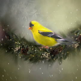 Mary Timman - Christmas Finch