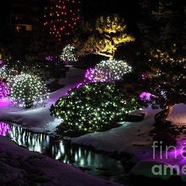 Steven Parker - Christmas Light Reflections