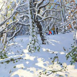 Christmas sledging in Allestree Woods - Andrew Macara