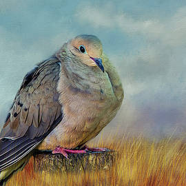 Cathy Kovarik - Chubby Dove