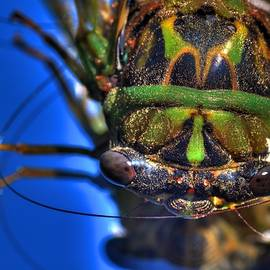 Robert Storost - Cicada 3
