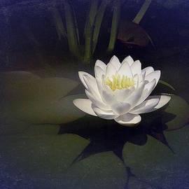 Richard Cummings - Classic Water Lily