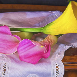 Daphne Sampson - Classical Pink And Yellow Calla Lilies