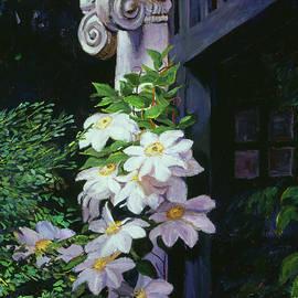 David Lloyd Glover - Clematis Blossoms