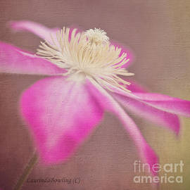Laurinda Bowling - Clematis in Square Format
