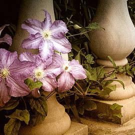 Julie Palencia - Clematis in the Garden
