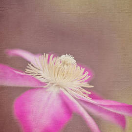 Laurinda Bowling - Clematis