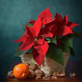 Nikolay Panov - Clementine and Red Star of Bethlehem Flower