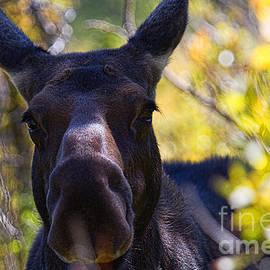 Jim Garrison - Close Encounters of the Moose Kind