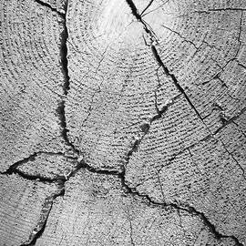 Close up of tree trunk - English School