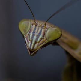 Linda  Howes - Close Up Praying Mantis