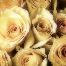 Close Up Yellow Roses - Garry Gay