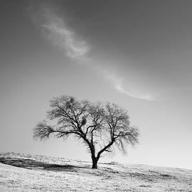 Alexander Kunz - Cloud Arc and Oak