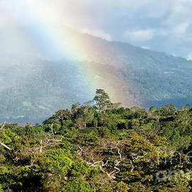 Genevieve Vallee - Cloudforest Rainbow