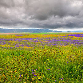 Lynn Bauer - Clouds Over Carrizo Wildflowers