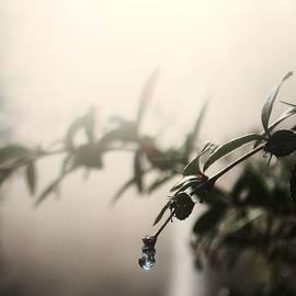 Scott Stolley - Cloudy Tears