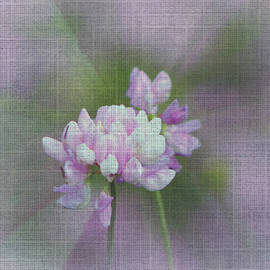 Beverly Canterbury - Clover with Texture