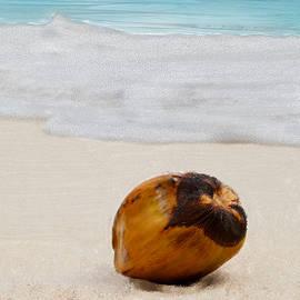 Bruce Nutting - Coconut on the Beach