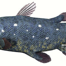 Corey Ford - Coelacanth Fish over White