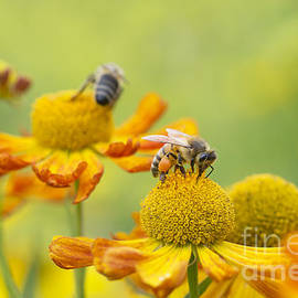 Collecting nectar - Tim Gainey
