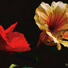 RC deWinter - Color and Light Suspended