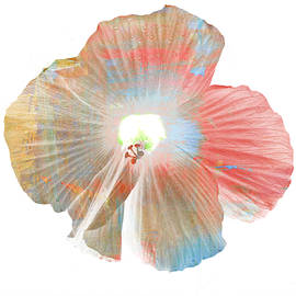 Kathy Barney - Color Art Hibiscus