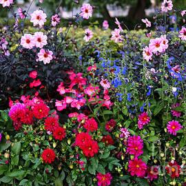 Carol Groenen - Color Burst Garden in Oslo