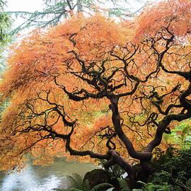 Abhay P - Color Me Autumn