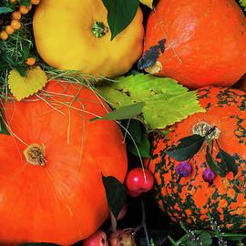 Svetlana Iso - Color of harvest