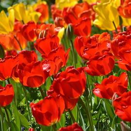 Joe Bledsoe - Color of Spring