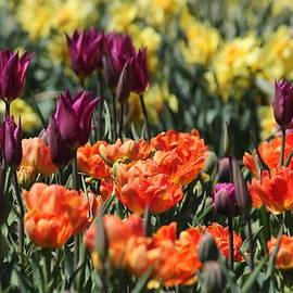 Rosanne Jordan - Color Splash of Spring