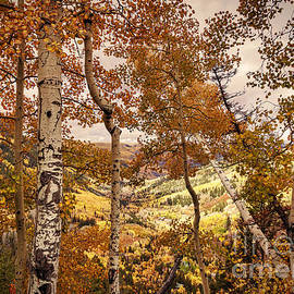 Janice Rae Pariza - Colorado Amazing Fall Colors