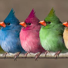 John Haldane - Colored Chicks