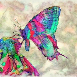 Jack Zulli - Colorful Butterfly 2